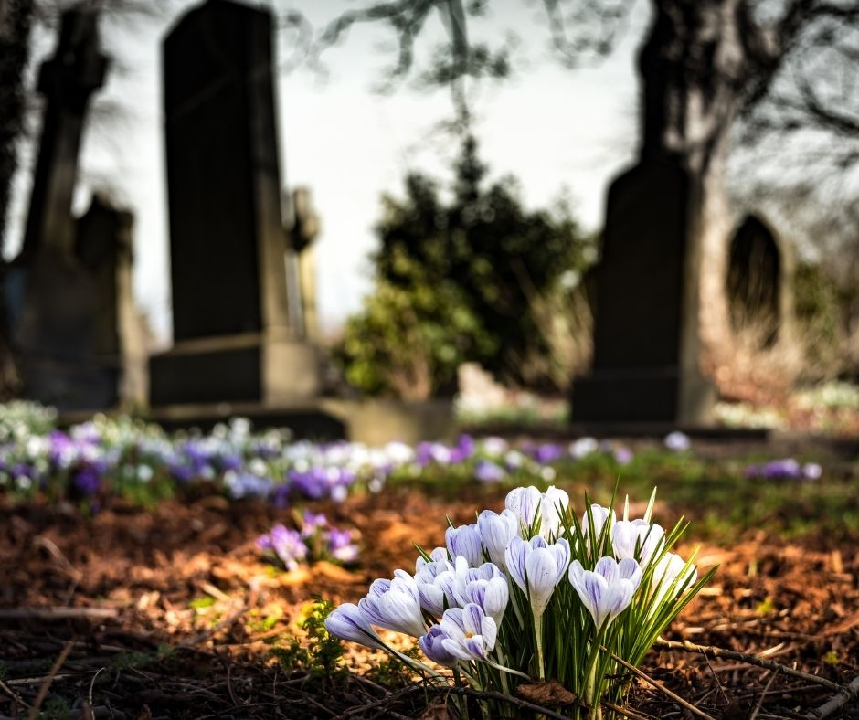 Milyen virág illik a temetőbe?